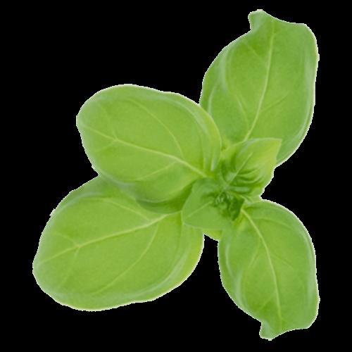 Yellow Scalp specifikus hatóanyag: bazsalikom