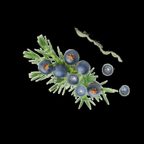Yellow Scalp specifikus hatóanyag: boróka